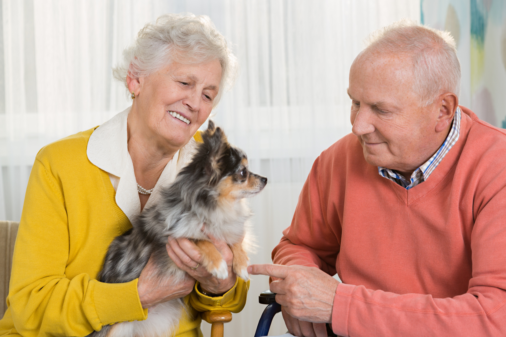 Senior couple with little dog, Chihuahua